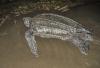 Rettung für geschmuggelte Orang - Utans und Lederschildkröten